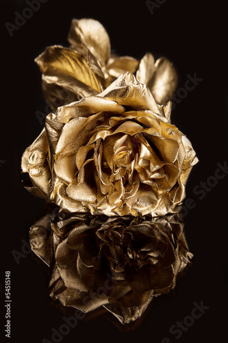 Golden rose against a dark background with reflection