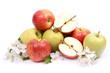 Erntezeit, Äpfel