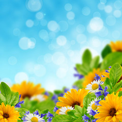 Wildflowers on the sky background
