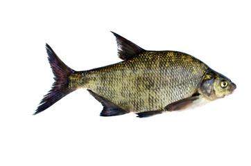 big fresh fish bream isolated on white