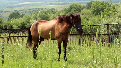 brown horse grazing in the meadow