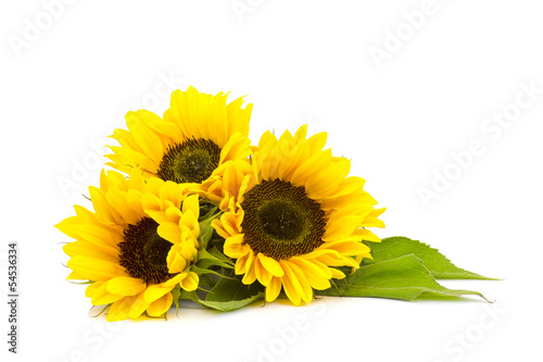 Aluminium Zonnebloemen sunflower on white background (Helianthus)
