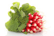 Botte de radis frais