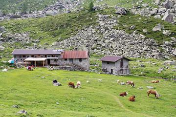 rifugio alpi italiane