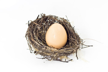 Egg in the nest.