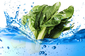 Chard splash in the water over white background