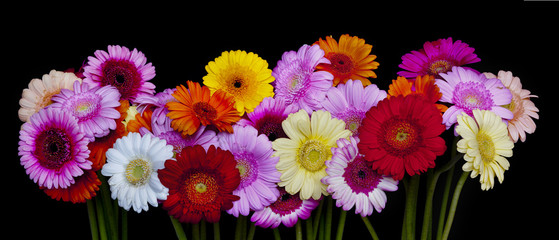 A bunch of colorful gerberas.