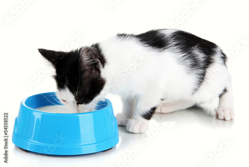 Kitten with food bowl isolated on white