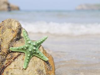 starfish stranded