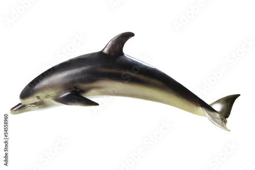 Foto op Canvas Dolfijnen Dolphin