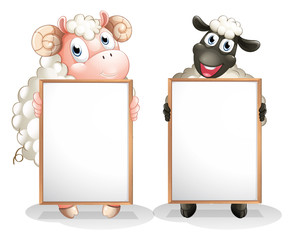 Two sheeps with empty boards