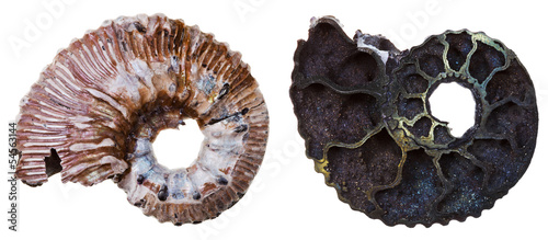 two sides of Fossil ammonite shell