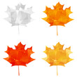 Set of autumn maple icons