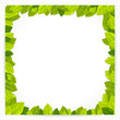 Square frame with green leaves. Vector illustration.
