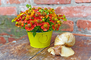 Bouquet of red flowers (Helenium) and giant snail (Achatina Reti