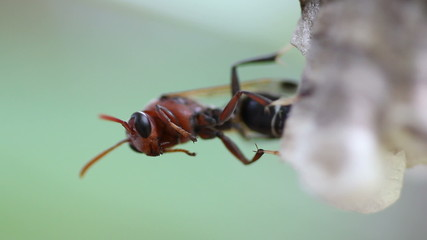 macro of hornet sitting on hive