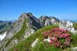 Alpenrosen, Berge, Blumen