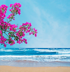 pink bougainvillea over a golden shore