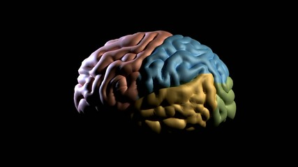 Human brain model  rotation