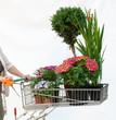 canvas print picture - Einkaufswagen mit Pflanzen