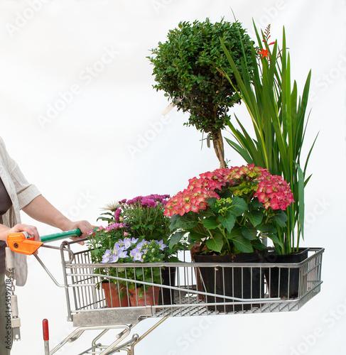 canvas print picture Einkaufswagen mit Pflanzen