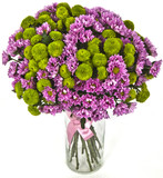 bouquet of hrisantemas  in vase on white background