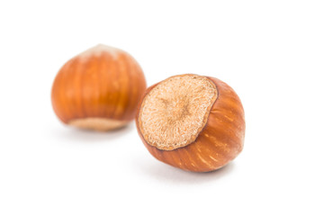 hazel nut isolated