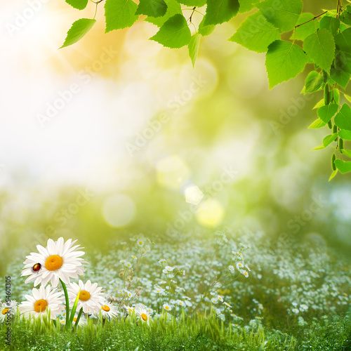 Beauty summer day on the meadow, abstract natural landscape