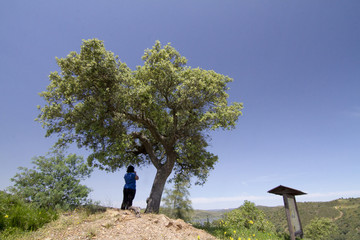 Woman stands on a hill with a tree watching the countryside.