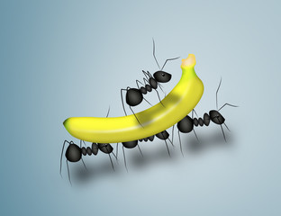 Ants and banana