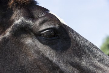 Eye of a black horse