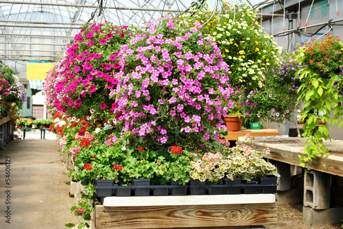 Hanging Flowering Plants in a Greenhouse