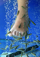 Doctor fish - fisha spa