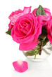 Beautiful pink roses in vase isolated on white
