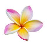 Flower of temple - Fine Art prints