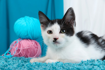 Small kitten on blue carpet on fabric background
