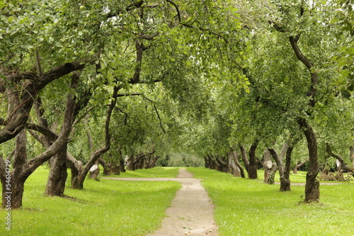 Fototapeten,park,garten,äpfel,äpfel