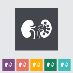 Human Kidney.
