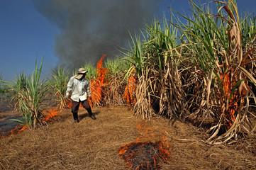 Sugarcane field burning in Thailand