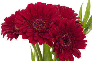 Bouquet of four beautiful red gerberas