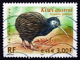 Postage stamp France 2000 Kiwi, Endangered Bird