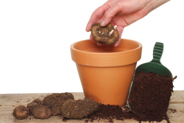 Hand planting a bulb