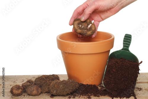 Hand planting a bulb