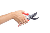 Woman hand holding an opened secateurs