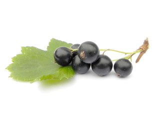 Berries of black currant.