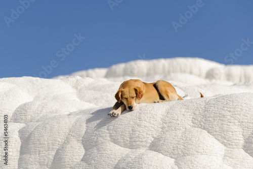 Dog in Pamukkale