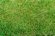 Grass sport field
