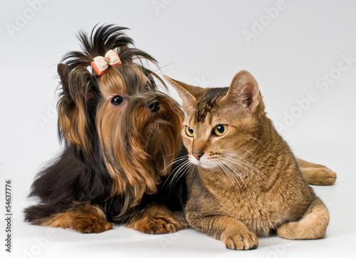 Fototapeten,tier,haustier,terrier,hund