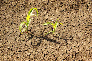 Dry soil with plant