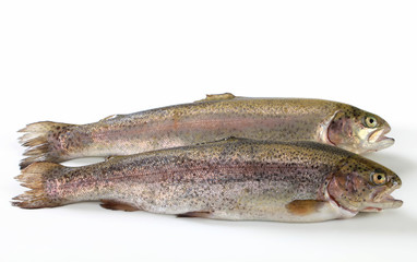 Two fresh trout